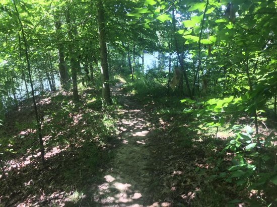 Arkansas: Trail behind site 79 leading to the lake