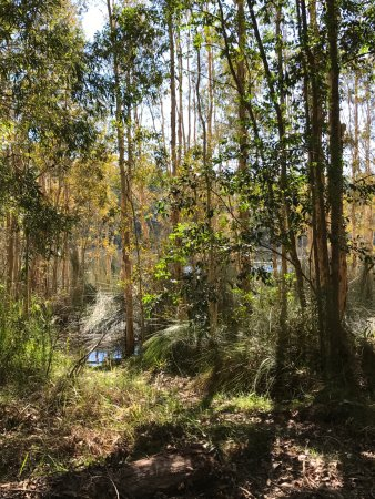 Mooloolah Valley, ออสเตรเลีย: On one of the side tracks