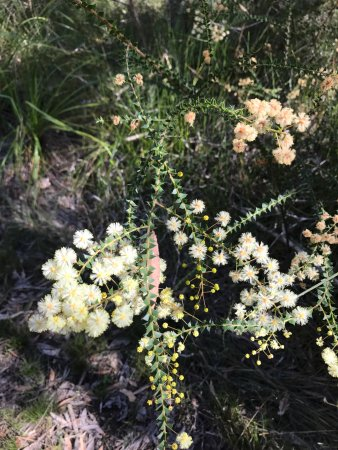 Mooloolah Valley, ออสเตรเลีย: Some lovely flora