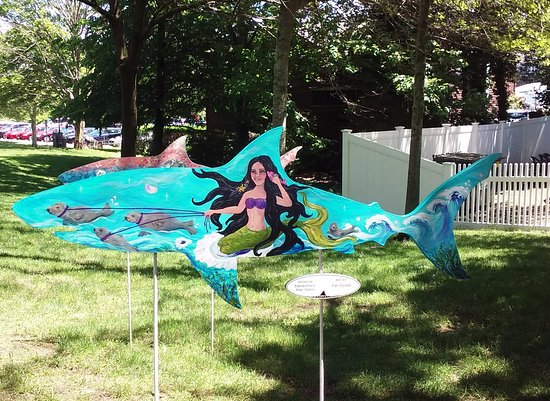 Chatham, MA: Mermaid Shark