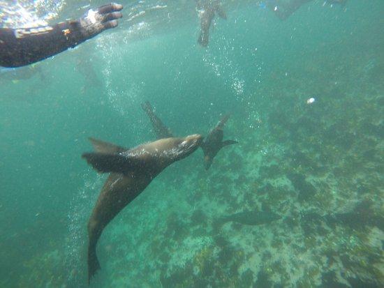 Hout Bay, Zuid-Afrika: photo2.jpg