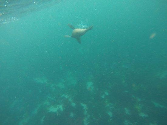 Hout Bay, Sydafrika: photo5.jpg