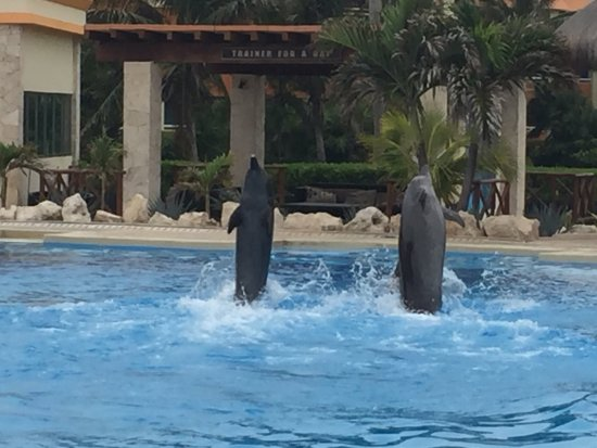 Dolphinaris Tulum: photo1.jpg