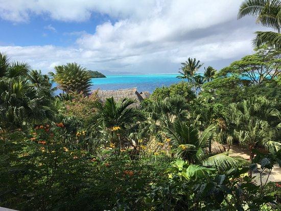 Maitai Polynesia Bora Bora Photo