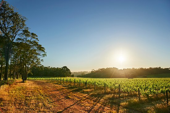 Rosa Brook, Australia: Brown Hill Estate Vineyard