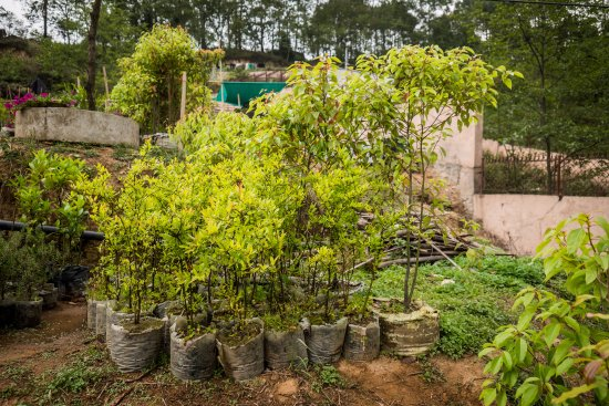 Nagarkot Buddha Peace Park Hiking Trail: Bought the trees from the nursery in nagarkot