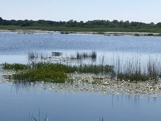 ‪Back Bay National Wildlife Refuge‬
