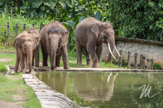 botanic3 - Picture of Lok Kawi Wildlife Park, Penampang ...