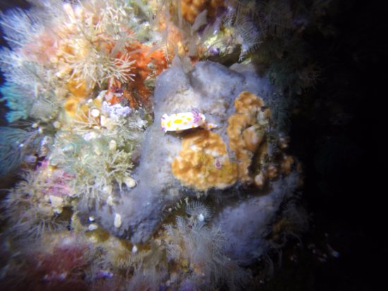 Tutukaka, Yeni Zelanda: Keep an eye out for nudibranchs.