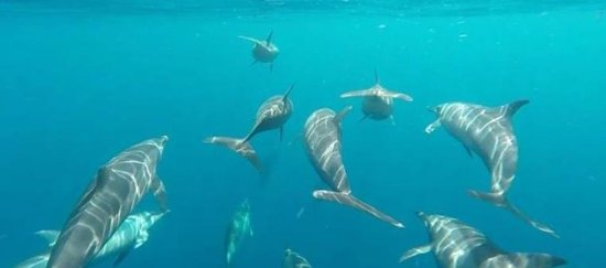 Bais City, ฟิลิปปินส์: GoPro shot of a pod of dolphins bowriding our boat.