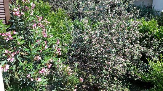 Basiglio, Italy: Ortensie e feijoia sellowiana