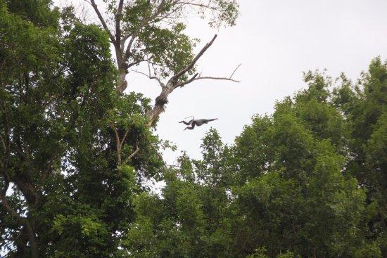 Cat Tien National Park, Vietnam: Amazing Langur