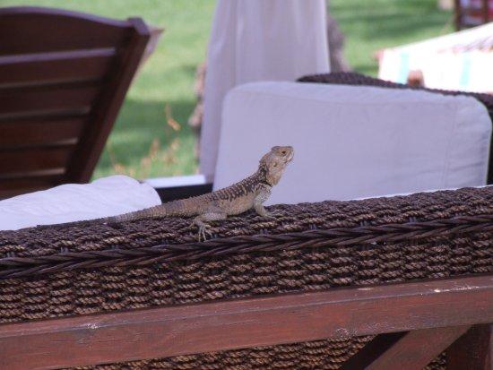 Constantinou Bros Asimina Suites Hotel: Hotel pet !!