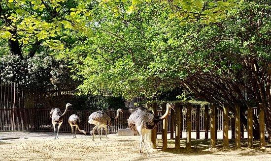 Picture of menagerie du jardin des plantes for Animalerie du jardin des plantes