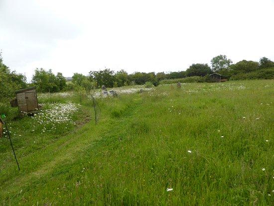 Manaccan, UK: Meadow above the B&B