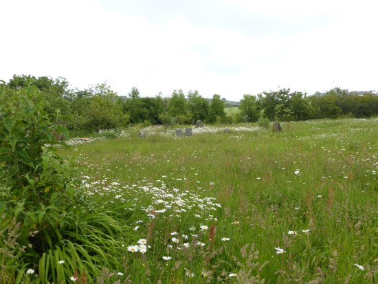 Manaccan, UK: Meadow