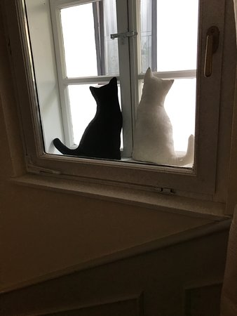 Lesar Hotel Angel: Window cats