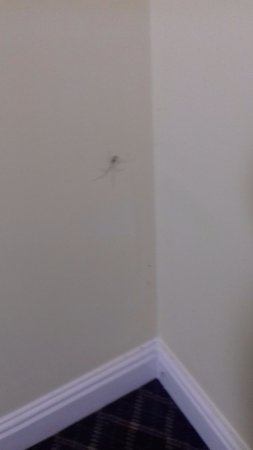Escrick, UK: Spider in Web on stairs leading up to rooms