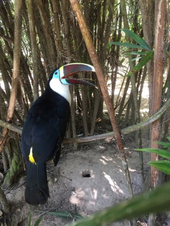 Isla Baru, Κολομβία: photo1.jpg