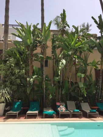 Les Jardins de la Medina Picture