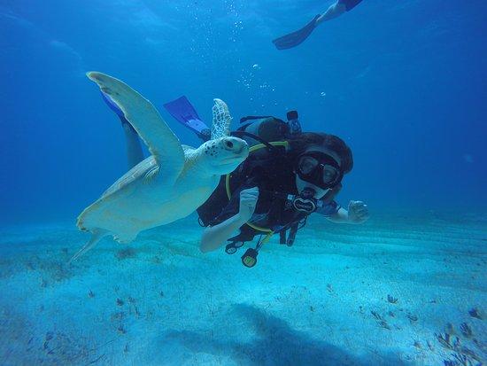 XP Diving