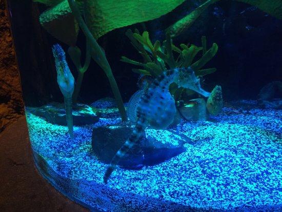 Sea Life Orlando Aquarium Picture Of Sea Life Orlando