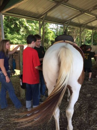 Stanley, VA: Learning how to put the saddle on - a requirement for scouts