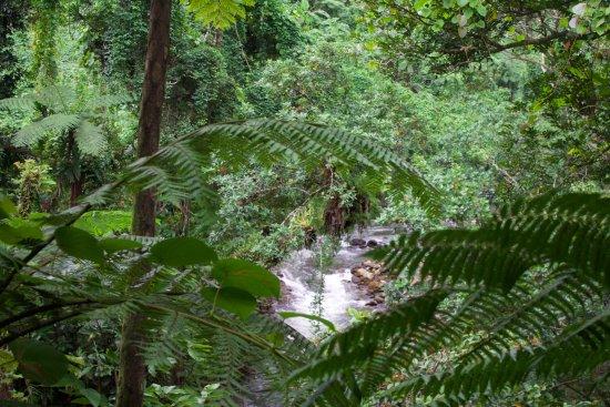 Lavena Coastal Walk: The river alongside the trail through the jungle