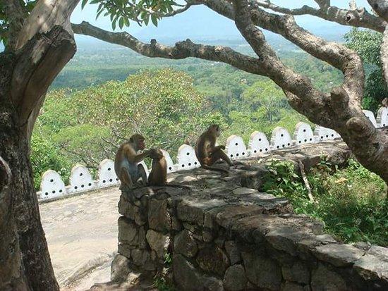 Kalutara, Sri Lanka: FB_IMG_1497288367695_large.jpg