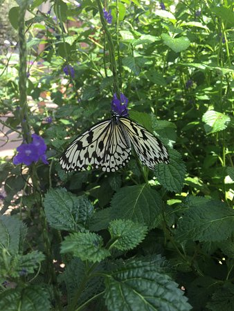 Pine Mountain, GA: Butterfly house