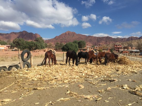 Tupiza Tours: ranch with the horses