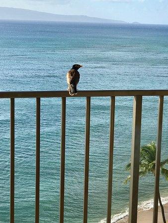 Valley Isle Resort: photo3.jpg