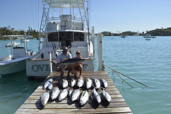 Somerset Village, Islas Bermudas: 1 Wahoo, 1 Skipjack Tuna, 2 Blackfin Tuna, and 13 Yellowfin Tuna.