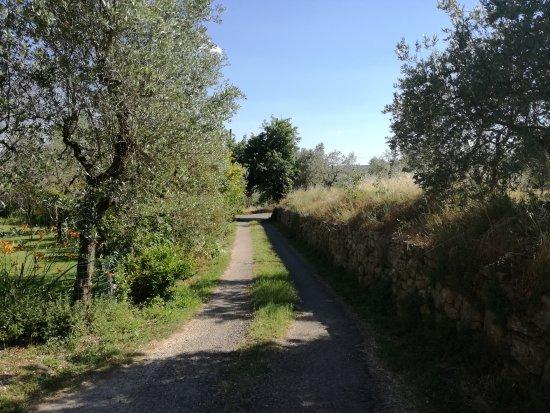 Civitella in Val di Chiana, Italia: Agriturismo La Loccaia