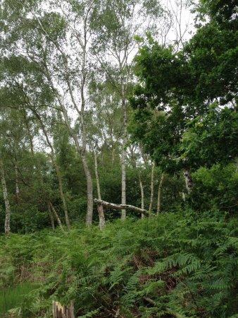 Nottinghamshire, UK: photo3.jpg