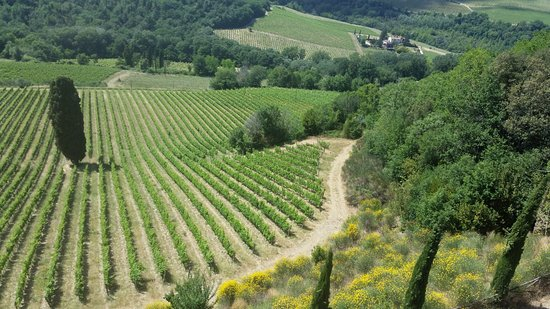 Tuscan Wine Tours with Angie Photo