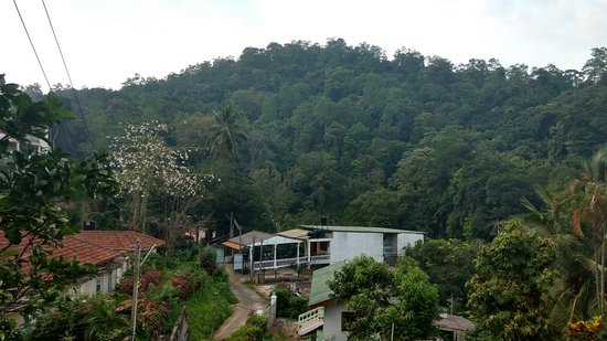 Green Villa Kandy: The location of the guest house (the white building) with the forest behind it