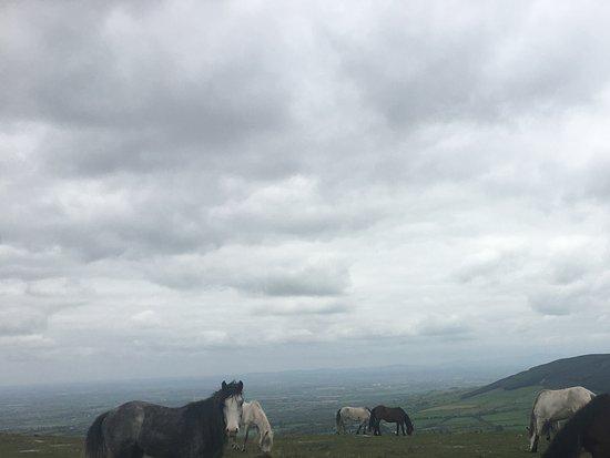 Bunclody, Ireland: wild horses