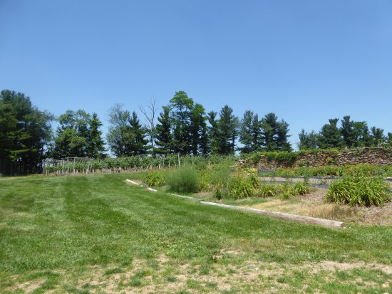 Elk Run Vineyards : Vines