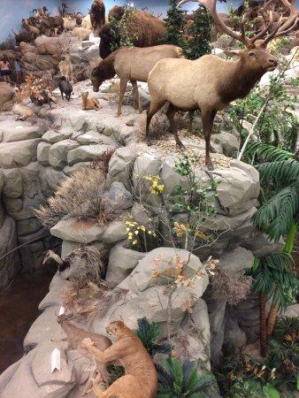 Rosenbruch Wildlife Museum: photo0.jpg