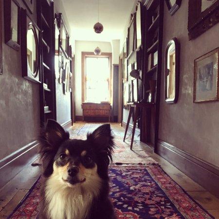 Oak Hill, Estado de Nueva York: Hallway leading to rooms