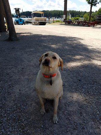 Waupaca, WI: River, friendly Greeter at Jimmy Ford's boards