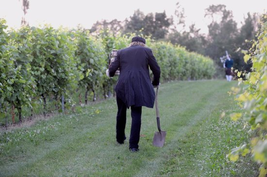 Grand Pre, Canada: Jerome among the vines
