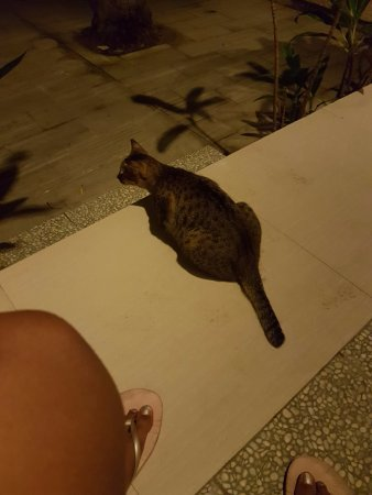 Pemenang, Indonesia: For cat lovers! Our furry friend - non-invasive, wild cats pass through during the evening