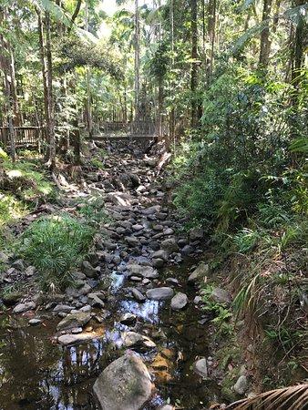 Buderim, Australia: Walking over the creek on the boardwalk