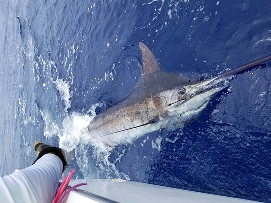 Tropical Sun Sportfishing: 20170610_115053_large.jpg