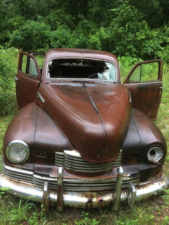 Roadside Rusted Ford Trucks: Dead trucks