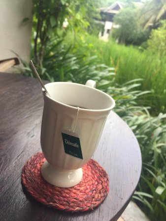Saraphi, Thailand: my tea