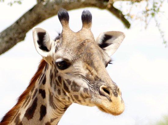 Tarangire National Park, Tanzania: First 5 minutes in park