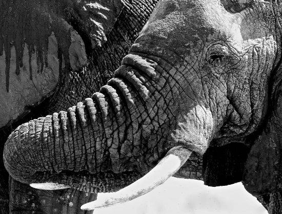 Tarangire National Park, Tanzania: Elephants are amazing